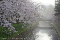 富山散歩~県東部385~松川の桜 2017 - Tomの一人旅~気のむくまま、足のむくまま~