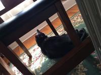 春だから窓際模様替え:ダイニングテーブル - にゃんこと暮らす・アメリカ・アパート