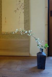 しじみ花 - g's style day by day ー京都嵐山から、季節を楽しむ日々をお届けしますー