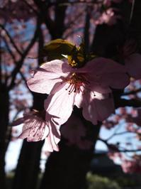 花酔い(穀雨) - ポケットに季節の手帖