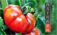 今年も、美味しいトマト入荷しました! - Aシェフの気ままBlog…