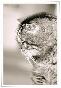 ― 花残月の もの想い ― - 風のうた 猫の呟き