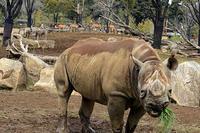 「アフリカのサバンナ」ゾーンの動物たち - 動物園放浪記