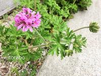 ■庭の花 - 働くことと暮らすこと