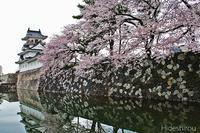 富山城址公園と松川の桜並木 - 英四郎