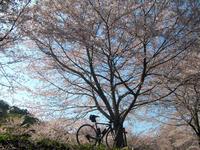 2017-04-16 お花見RIDE - 琵琶湖 FREERIDE WEB from LAKE BIWA JAPAN