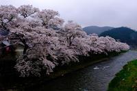美甘宿場桜 - とりあえず撮ってみました
