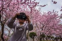 ★桜カメラウーマン - 一写入魂
