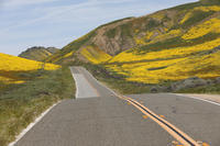 Carrizo Plain National Monument  -- カリフォルニア最後の草原 -- - 南加生活写録 --- Life In Fillmore ---