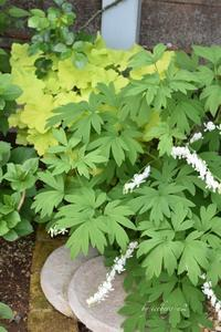 裏庭がモリモリ〜緑がいっぱい - 小さな庭 2