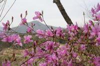 一番可愛らしい色の季節 - 宮迫の! ようこそヤマボウシの森へ