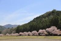 桜のある風景 - ecocoro日和