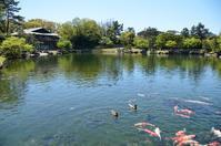 徳川園の牡丹 - 好きな事を好きな時だけ
