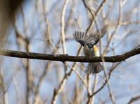 やっと出会えた青い鳥 - うちのまわりの自然新聞