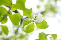 春の花 - 長い木の橋