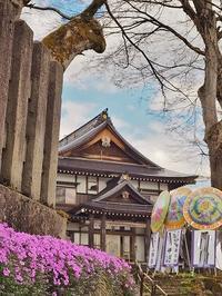 枝垂れ桜もうすぐ満開です! - 浦佐地域づくり協議会のブログ