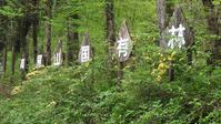 裏高尾探鳥会 - 山と鳥を愛するアナパパ