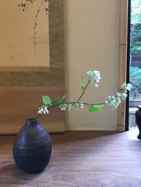 アセビ - g's style day by day ー京都嵐山から、季節を楽しむ日々をお届けしますー