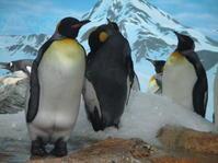 写真「鴨川のペンギン達」 - 物書きkumaさんの創作日和