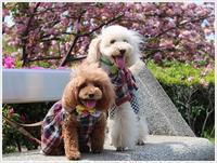 平和市民公園では、季節の花たちが目を心を、楽しませてくれますよ~ - さくらおばちゃんの趣味悠遊