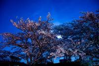 過ぎし春 - 散策のすすめ