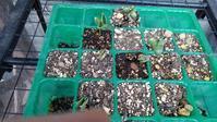 枝豆植え付け - うちの庭の備忘録 green's garden