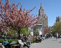 ニューヨークの春を楽しむ - NY/Brooklynの空の下