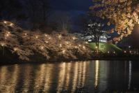 日本三大夜桜高田城百万人観桜会 - 常にカメラを持ち歩く