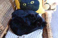 黒猫♥ - りきの毎日