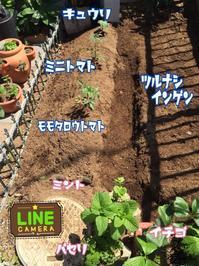 夏野菜の植え付け - チェロママ日記
