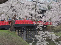 弘前公園の桜*2017.04.27 - 津軽ジェンヌのcafe日記