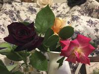 ウチのバラ祭り - 朝寝・夜更かし・つまみ食い