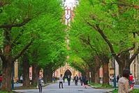 東京大学、本郷キャンバスで・・ - あの町 この道