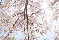 病棟写真館のこと - from自由が丘 ベビー・キッズ・マタニティ・家族の出張撮影、say photography