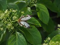 八重山の蝶たち - 風の翅