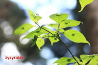 春、木陰でひっそりと - ジージーライダーの自然彩彩