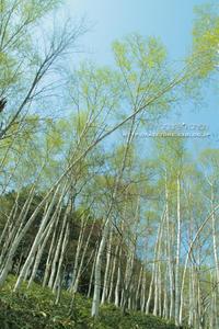 県森の春** - きまぐれ*風音・・kanon・・