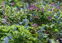 里山に咲く春の花 - お茶にしませんか