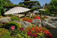 當麻寺・奥院の牡丹咲くお庭 - 花景色-K.W.C. PhotoBlog