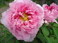 花のおすそ分け返し(?) - とりとめのない日々~花と言葉と犬たちと