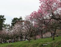 本州最北の梅園と弘前公園外堀の桜。全部を車窓から~♪ - 窓の向こうに