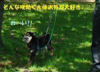 お外が大好き♪♪ - もももの部屋(怖がりで攻撃性の高い秋田犬のタイガ、老犬雑種のベスの共同生活&保護活動の記録です・・・時々お空のモカも登場!)
