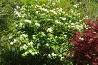 No 85  福渡は新緑の季節(2017年4月29日) - カメラをもってぶらぶら散歩中