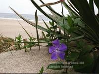 ■花のある風景 - surftrippper サーフィンという名の旅