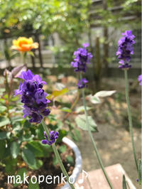 ペンキ塗りと新入りの植物たち♪ - まこぺんこ's  WORLD