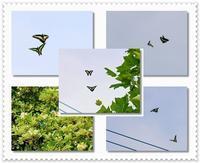 蝶達も恋の季節 - 気ままにデジカメ散歩