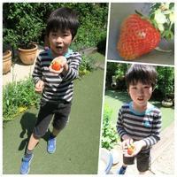GW前半は、お庭でイチゴ狩り&多摩川でピクニック! - 恋子のガーデニング日記