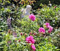 バラのある暮らしの楽しみ - バラとハーブのある暮らし Salon de Roses