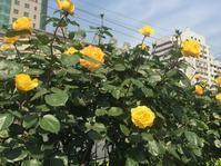 GW北京6日目(^^) 北京の緑化、美化政策 - おはけねこ 外国探訪
