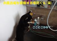 咲助くん、初シャンプー!! - もももの部屋(怖がりで攻撃性の高い秋田犬のタイガ、老犬雑種のベスの共同生活&保護活動の記録です・・・時々お空のモカも登場!)